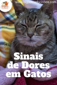 Se você tem gato já teve ter se perguntado sobre sinais de dores em gato. Afinal esses animais são extremamente sutis e reservados, principalmente quando o assunto é dor. Eles não costumam dar sinais claros logo de cara. Ou às vezes, você só não entende o sinal. É por isso que nesse artigo vamos esclarecer sobre sinais de dores em gatos. Animals And Pets, Cute Animals, Pet Vet, Gatos Cats, Pets 3, Pet Shop, I Love Cats, Pet Care, Neko
