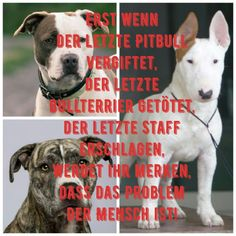 Source by b_stebel No related posts. Pitbull Bull Terrier, Bully Dog, Kinds Of Dogs, Cat Supplies, Animal Rights, Beautiful Dogs, Dog Friends, I Love Dogs, Animals And Pets