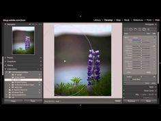 Lightroom Tutorials for Beginners: How to use Radial Filter - 121Clicks.com