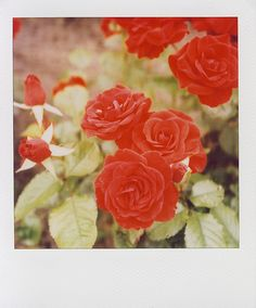 Roses are red. Violets are blue. We love photos, and we bet you do too!