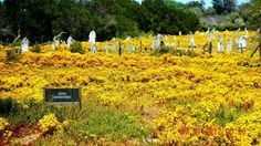 Leper Graveyard Robben Island, South Africa