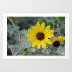 Buy Sunflower Art Print by Michael Burnett. Worldwide shipping available at Society6.com. Just one of millions of high quality products available.