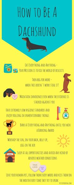 How to Be A Dachshund Infographic - funny Infographic showing the world through those cheeky sausage dog eyes! Who else would sunbathe belly up legs akimbo?!