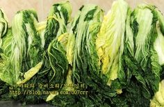 김장김치 실패없이 담그는법, 김장김치10포기양념 Korean Food, Asparagus, Vegetables, Studs, Korean Cuisine, Vegetable Recipes, Veggies