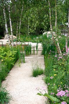 Wild looking garden. Love the white gravel path with the plants growing inside the lines.