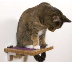 Square Cat Habitat features different cat wall furniture products like our modern cat wall shelves, cat window perch, cat wall perch, and wall-mounted cat scratcher. Rustic Cat Furniture, Cat Wall Furniture, Modern Furniture, Cat Window Perch, Cat Perch, Cat Climbing Shelves, Cat Habitat, Cat Stairs, Cat Climber