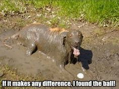 "Funny Dogs - ""If it makes any difference, I found the ball"" #dogs #pets #canine"