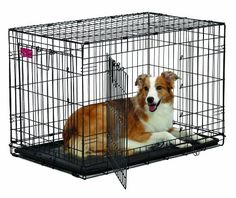 Dog Houses - MidWest Homes for Pets Life Stages ACE Double Door Dog Crate 36Inch ** Details can be found by clicking on the image. (This is an Amazon affiliate link)