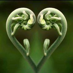 Fiddle leaf Male fern Nature Wicca Love