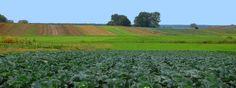 Kvasená zelenina výrobky petržlen zeler zemiaky Obec Charsznica