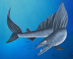 Lancet fish                    Alepisaurus Brevirostris         langneus-lansetvis