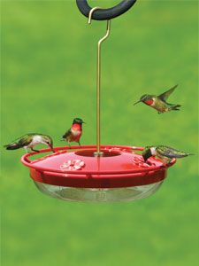 WBU High Perch™ Hummingbird Feeder - 12 oz The most popular Hummingbird feeder at our store; this feeder has a raised perch so you can see the birds' itty-bitty feet! Has a built-in ant moat and a chance to deter bees.