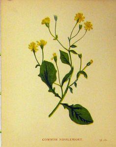old-antique-victorian-print-B3151860186.jpg (850×1075)