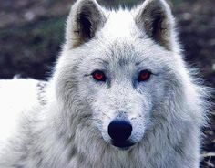'Ghost' from Game of Thrones…He's one of my favourite characters…along with 'Jon Snow' of course...
