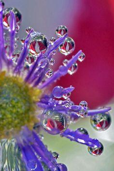 Pansy Petal Puddles | Flickr - Photo Sharing!