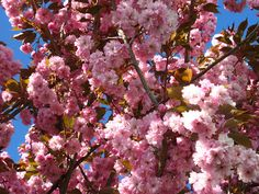Roots to Breath Wellness: 8 Ways to Say Hello to Spring!