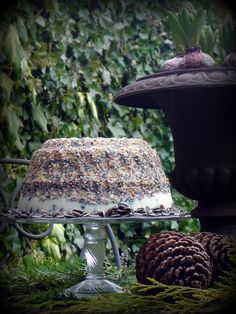 ... making bird food cakes.