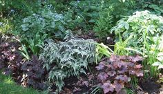 In spring, the heart-shaped leaves of Brunnera and Epimedium contrast with the intricate geometry of ferns and the airy leaves of Columbine (especially our native Aquilegia canadensis), Fern-Leaf Bleeding Heart (Dicentra formosa) and Columbine Meadow Rue (Thalictrum aquilegifolium), while providing a background to spring bulbs (and later hiding their messy foliage). The sword-shaped leaves of Siberian iris stand like exclamation marks long after their flowers have faded.