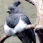 Birds Exhibits at Houston Zoo Houston, TX #Kids #Events
