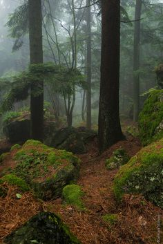 Mystic world of magic. If you like handsome vikings, Scandinavia, wild nature and magic, it's a place for you. Forest Path, Tree Forest, Conifer Forest, Mother Earth, Mother Nature, Mystical Forest, Walk In The Woods, Landscape Photos, Nature Photos