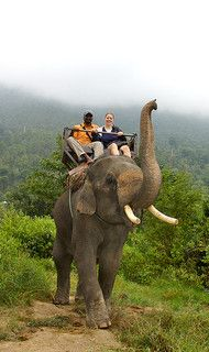 Picture Of An Elephant Trek