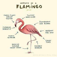 Anatomy of a Flamingo 💟