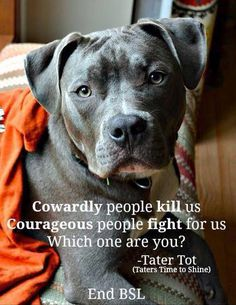Pitt bull inspiration-I would always fight for a pitty! such loyal dogs Beautiful Dogs, Animals Beautiful, Cute Animals, Beautiful Creatures, Crazy Animals, Animals Dog, Funny Animals, Pitbull Terrier, Bull Terriers