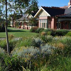 26 Best Perth WA Native Garden Ideas images | Garden ...