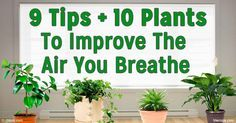The air you're breathing inside your home can be 5 times more polluted than the air outside. Here are some tips to keep indoor air pollution levels lower. http://articles.mercola.com/sites/articles/archive/2016/05/11/improve-indoor-air-quality.aspx