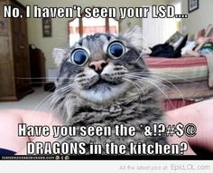 No, I haven't seen your LSD