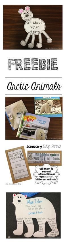 Arctic Animal Fun, Freebie, and Flip Books! Animal Activities, Winter Activities, Preschool Winter, Winter Fun, Winter Theme, Winter Holidays, Artic Animals, Penguins And Polar Bears, Kindergarten Science