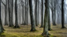 Photograph Gespensterwald by Anke Kneifel on 500px