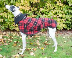 Greyhound Winter Coat Dog Coat Greyhound by CrystalWolfCollars