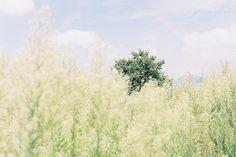 Hazy #3 by momomi_aloha_garden, via Flickr