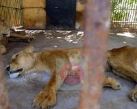 WE HAVE TO STOP THIS! Giza, Alex, Fayoum, Kafr El Sheikh, Arish are the names of the Eygptian Zoos . These places are Starving , Torturing , Abusing poor defenceless animals. STOP ZOOS