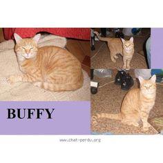 """207732 Chat perdu : """"Buffy""""  Perdu chat, roux, femelle, poils courts, pelage tigré. Perdu le 04/09/2015 45320 COURTENAY (FR)."""