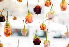 Hermetica Flowers-Florist-Darlinghurst- Broadsheet Sydney - Shop - Fashion - Broadsheet Sydney