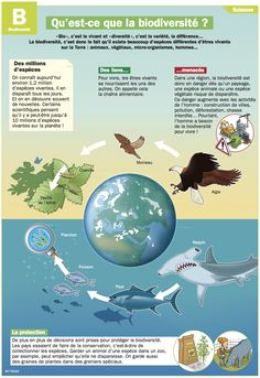 Science infographic Quest-ce que la biodiversité ? Teaching Science, Science For Kids, Science And Nature, Science Crafts, Science Education, Physical Science, Science Classroom, Earth Science, Science Experiments