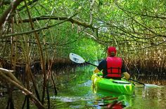 Paddling through another set of mangrove tunnels - Turner River, Florida