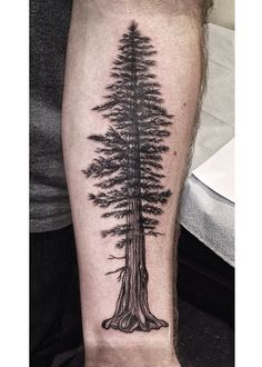 Pine tree tattoo I worked on today. Based off a giant redwood. Love doing nice illustrative tattoos like this! #pinetreetattoo #tattoos #tattooideas #redwood #tree tattoo #pine