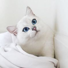 Good morning!! Is there more to life than catnaps?! @cobythecat #toystyle #pff #petfriendly #animallovers #cat #catlovers #lovecats #white #touchofpink