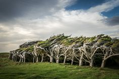 ***Extremely windswept trees (Slope Point, New Zealand) by Hamish Cattell - 500px