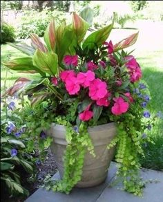 Shade:  aglaonema Valentine (Chinese evergreen), pink New Guinea impatiens, blue torenia, creeping jenny by Lorraine Maddox