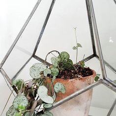 Add some green into your home by placing your favourite plant inside our glass & zinc terrarium. 📷 @littlegreenshed