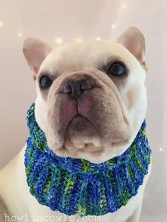 Keepsake OOAK Dog Cowl or Collar, Wedding Dog Accessory, Handmade, Medium breed, Blue and Green, Handpainted, Frenchie collar, dog cowl