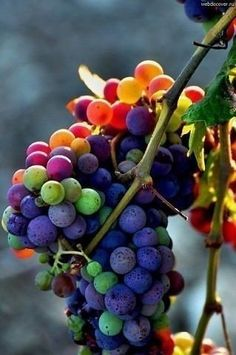 виноград!