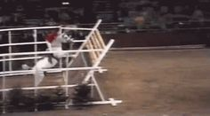 Two words: Mad. Hops. 1978 video of a then 21-year-old Nick Skelton and Lastic soaring over a 7′ 7.4″ high jump at Olympia.