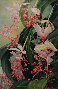 """Blossoms at Koele""  by Ruth Watkins from Cedar Street Galleries, Oahu"