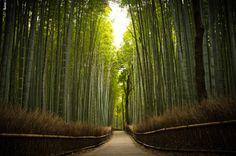 bamboo path