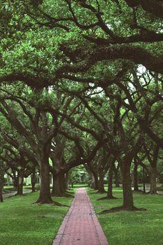 South Boulevard - Houston, Texas (2hr 38min)